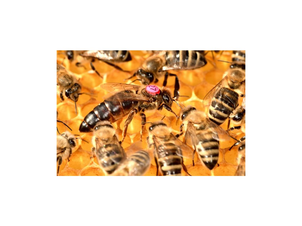 bees 5480566 640