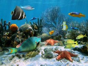 00BP AVVENTURA IN BARCA CON IL FONDO TRASPARENTE E SNORKELING pesci multicolori