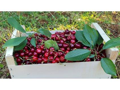 Třešně 1kg
