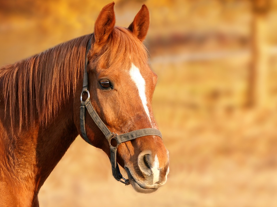 Velké koňské derby z Pardubic