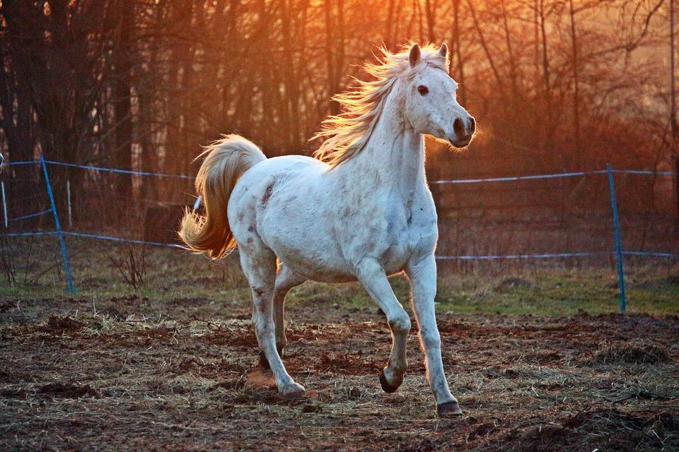 horse-2063672_960_720