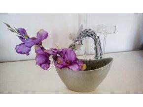 Fialová gladiola