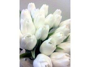tulip bílá hotová