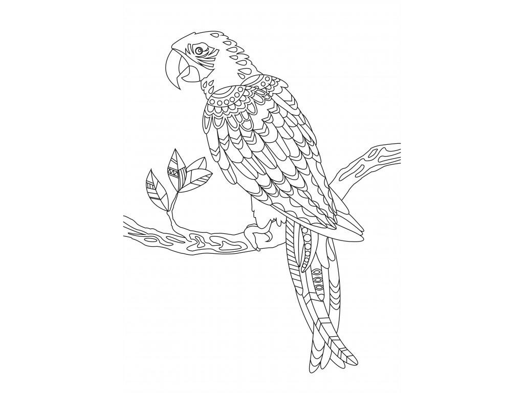 Šablona Papoušek 2