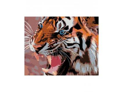 zuty Malování podle čísel - MODRÉ TYGŘÍ OČI Rozměr: 40x50 cm, Rámování: vypnuté plátno na rám
