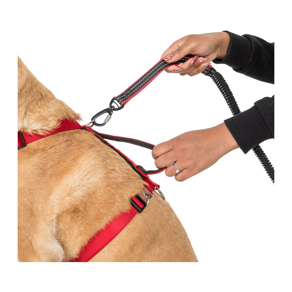 CHESTER - DOG RUNNING BELT AND LEASH