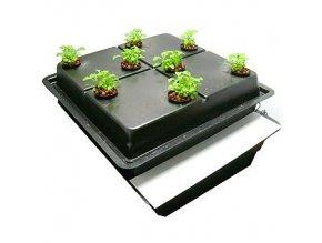 Amazon pro 8 rostlin