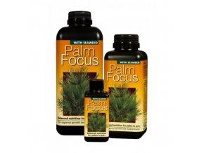 GT - Palm Focus
