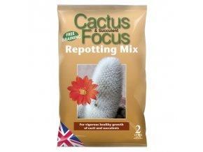 GT - Cactus Focus 2l