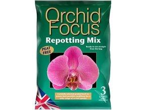GT - Orchid Focus 3l