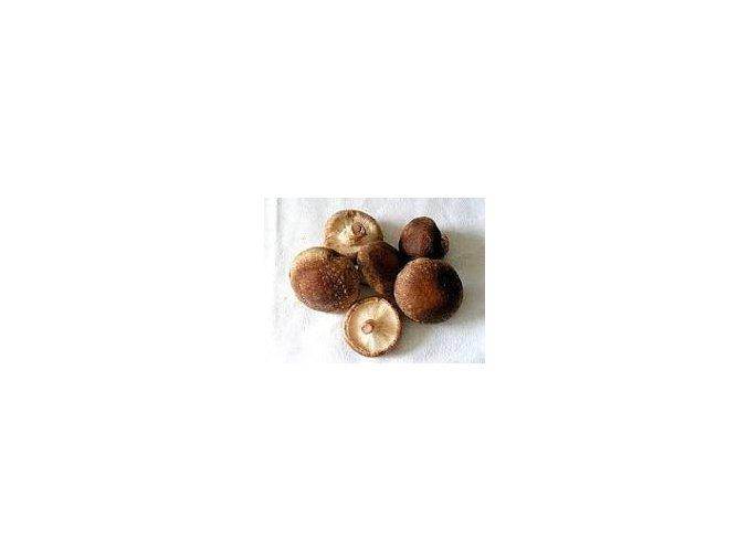 shiitake houby