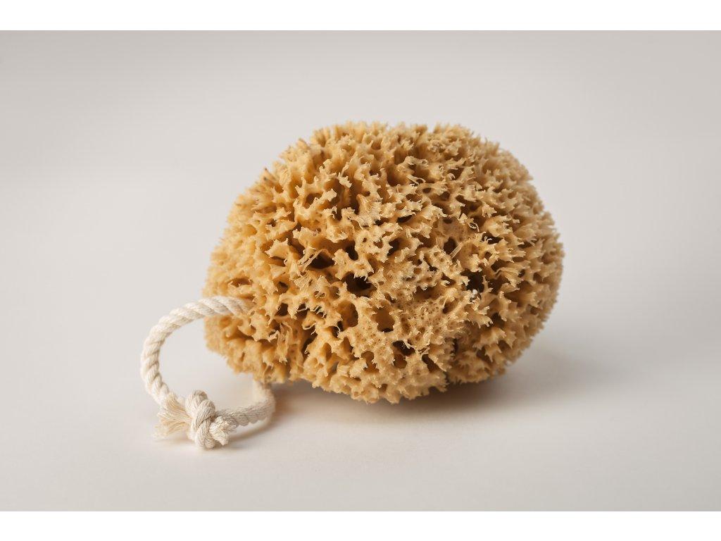 Mořská houba Honeycomb střední