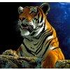 Diamantové malování basic - tygr