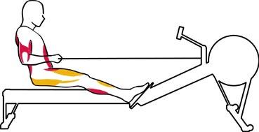 veslovani-faze-4