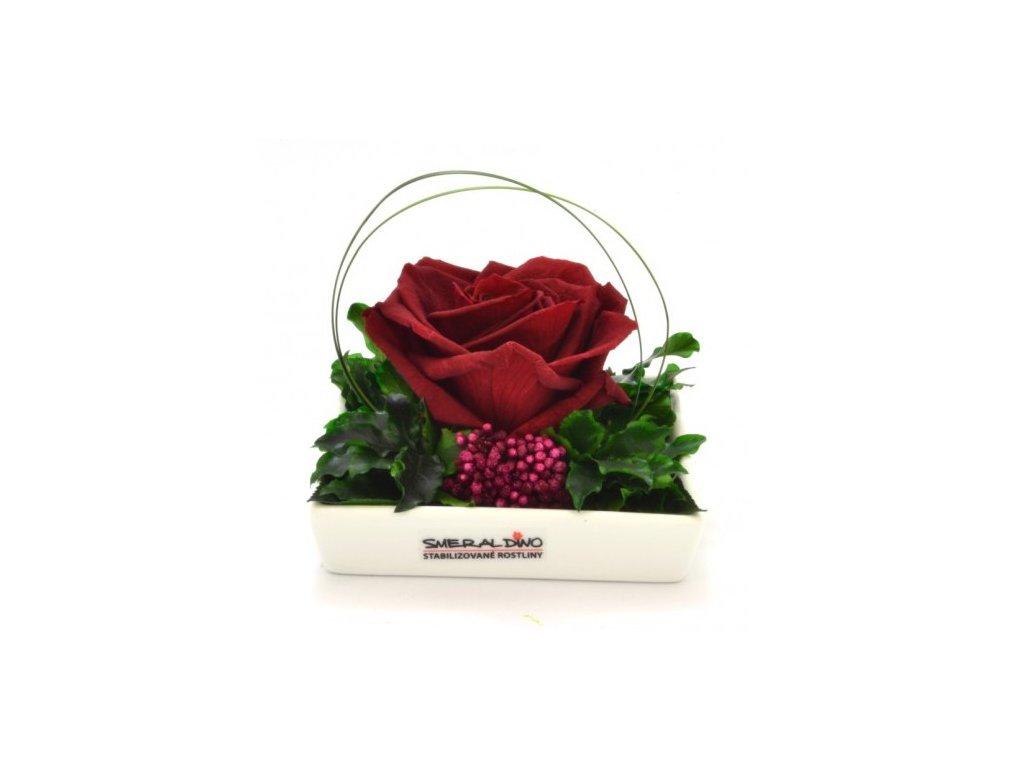 Stabilizovaná růže DITA