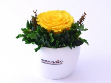 Stabilizovaná růže BEA