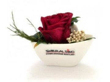Stabilizovaná růže ANETA
