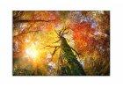 Obrazy lesa