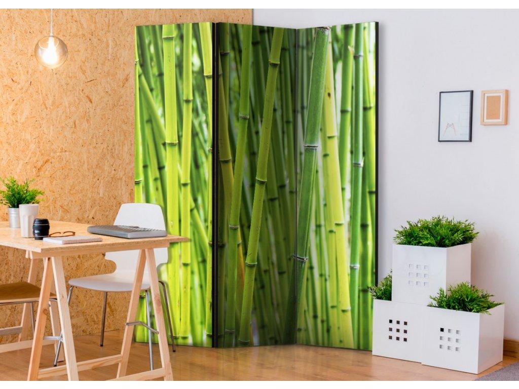 Paraván bambusový les