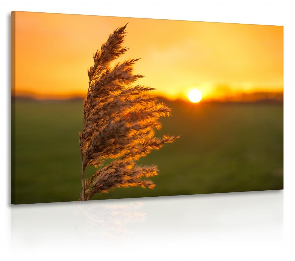 Luční tráva jednodílný obraz 90x60 cm