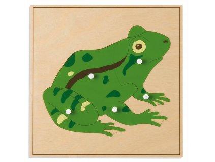 Puzzle – žába