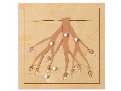 Puzzle – kořen