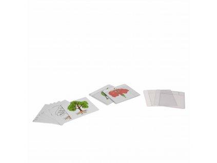 První sada botanických karet