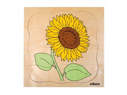 Vývojové puzzle - slunečnice