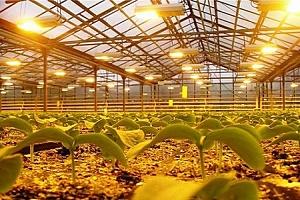 Osvětlení rostlin