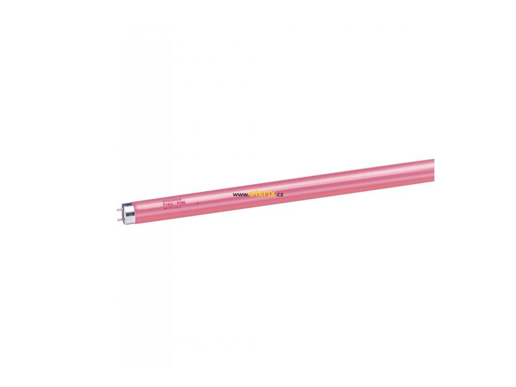 F36W/T8/Pink