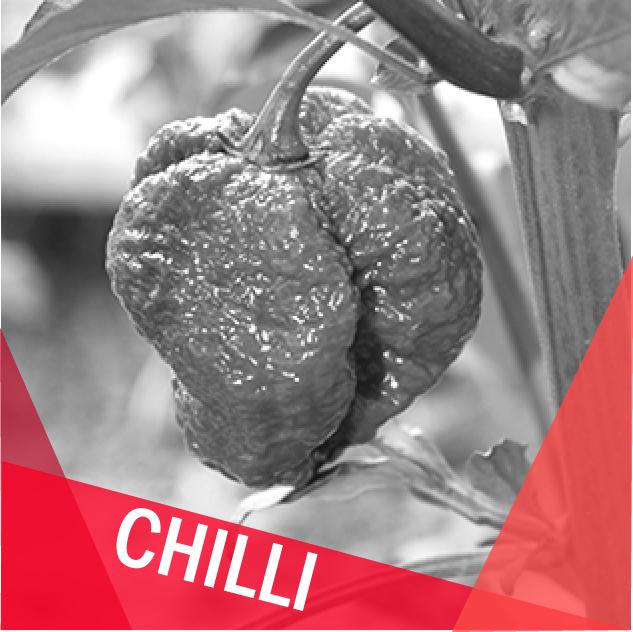 Chilli papričky a semínka chilli a sazenice chilli