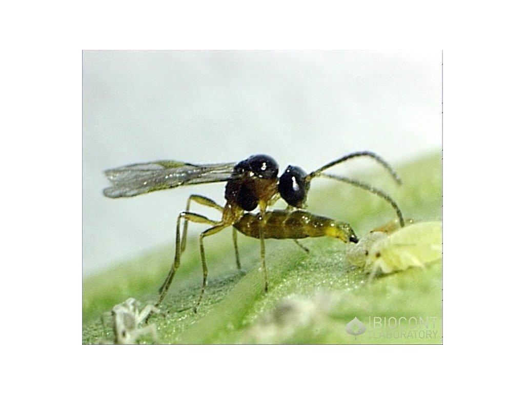 Ochrana Proti škůdcům