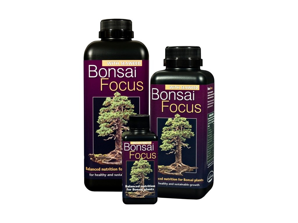 3037 Bonsai Focus family