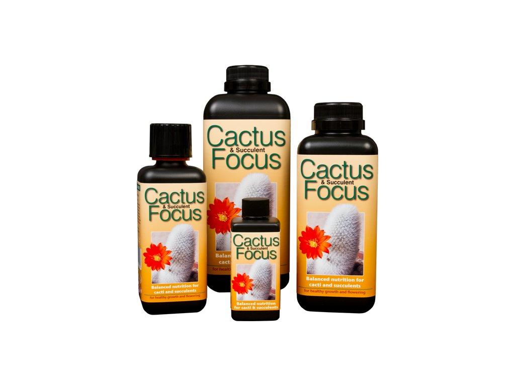 cactus focus(2) z1