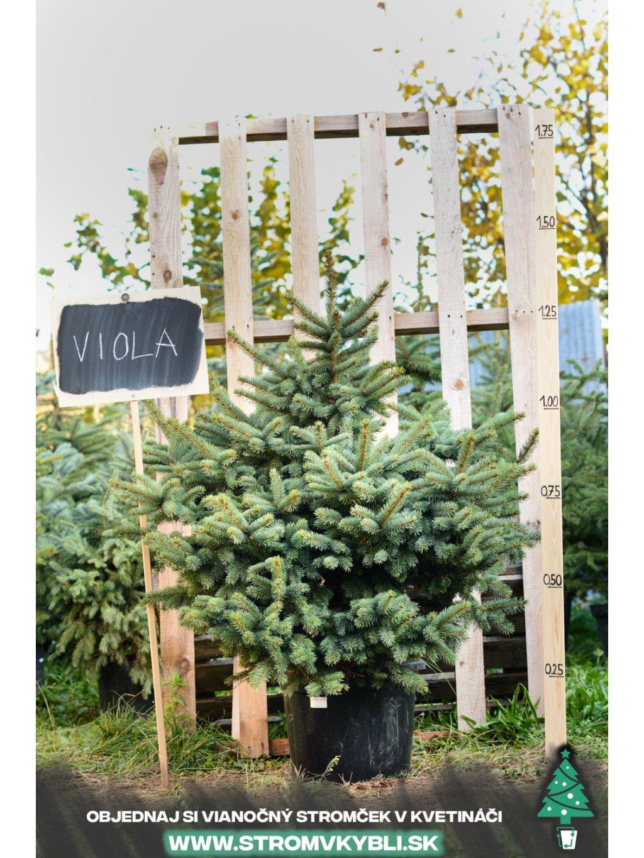 Viola 0370