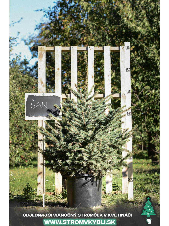 Vianocny stromcek v kvetinaci stromvkybli Sani 9556 3 2 3 3