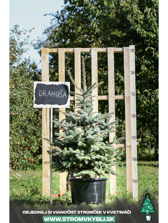 Vianocny stromcek v kvetinaci stromvkybli Drahusa 9164 3 2 3 3