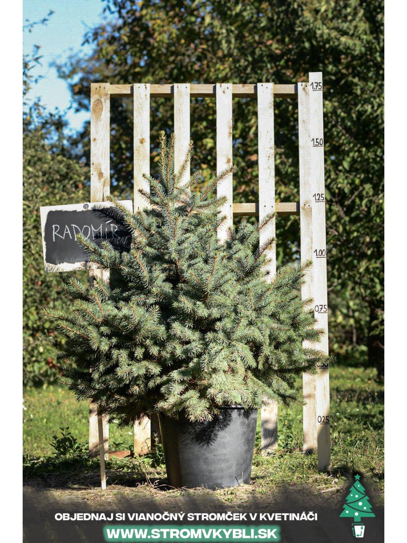 Vianocny stromcek v kvetinaci stromvkybli Radomir 9562 3 2 3 3