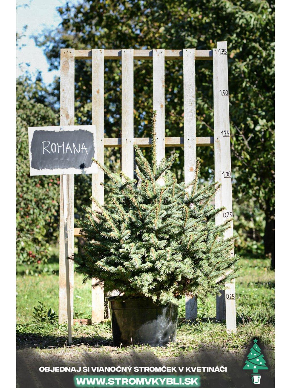 Vianocny stromcek v kvetinaci stromvkybli Romana 9537 3 2 3 3