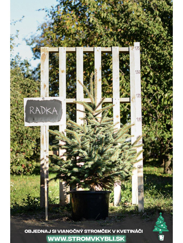 Vianocny stromcek v kvetinaci stromvkybli Radka 9592 3 2 3 3
