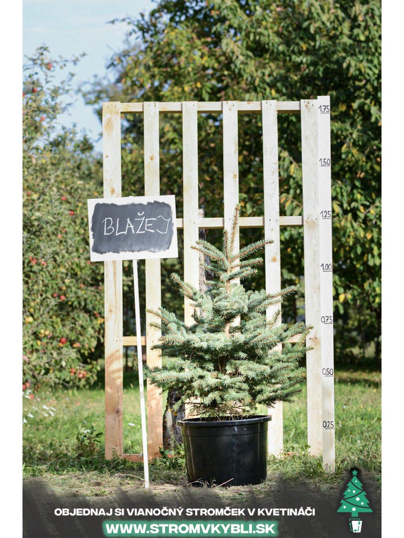 Vianocny stromcek v kvetinaci stromvkybli Blazej 9325 3 2 3 3