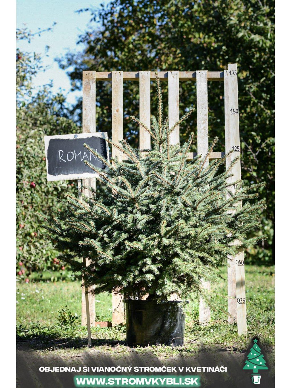 Vianocny stromcek v kvetinaci stromvkybli Roman 3 2 3 3