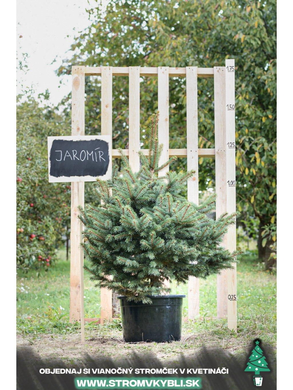 Vianocny stromcek v kvetinaci stromvkybli Jaromir 9489 3 2 3 3