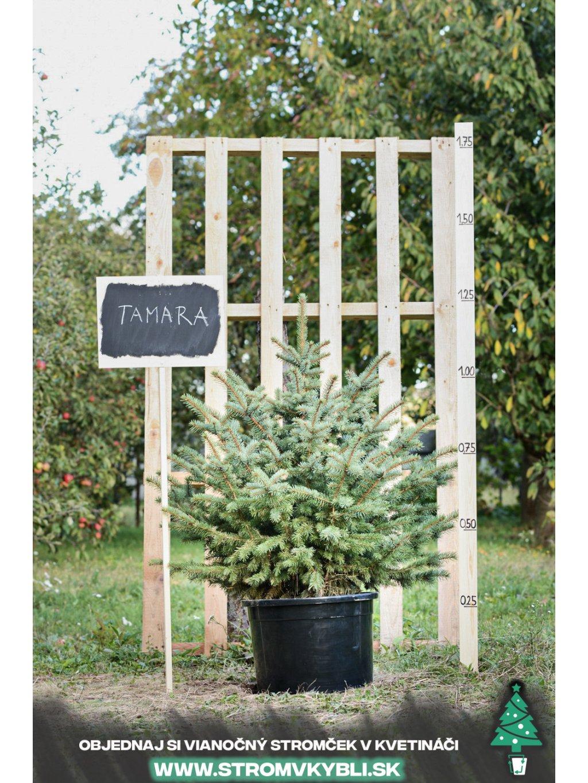 Vianocny stromcek v kvetinaci stromvkybli Tamara 9481 3 2 3 3