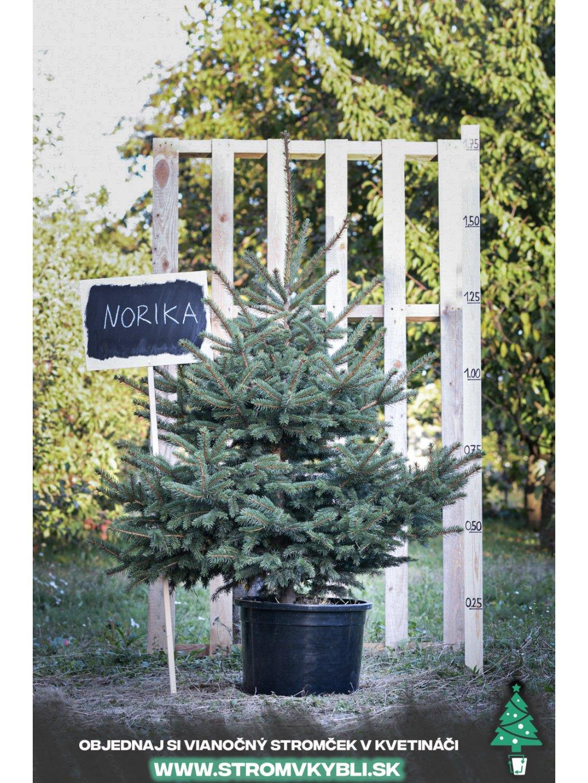 Vianocny stromcek v kvetinaci stromvkybli Norika 9511 3 2 3 3