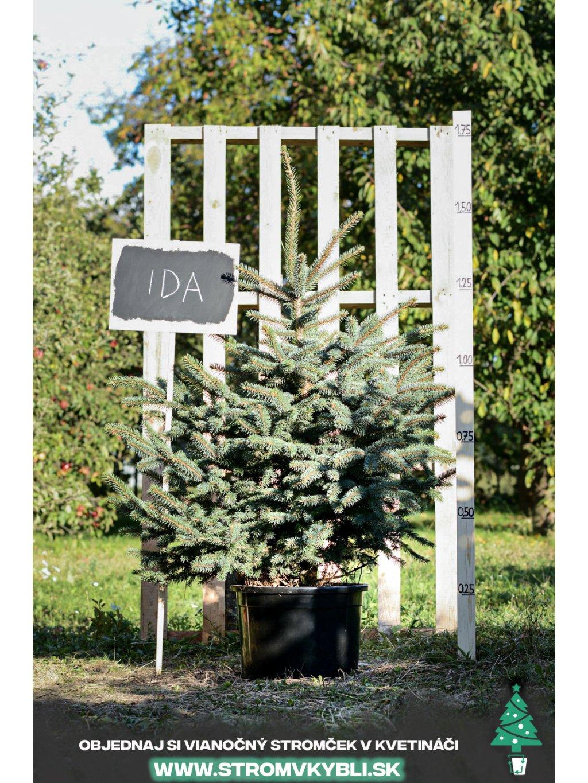 Vianocny stromcek v kvetinaci stromvkybli Ida 9474 3 2 3 3