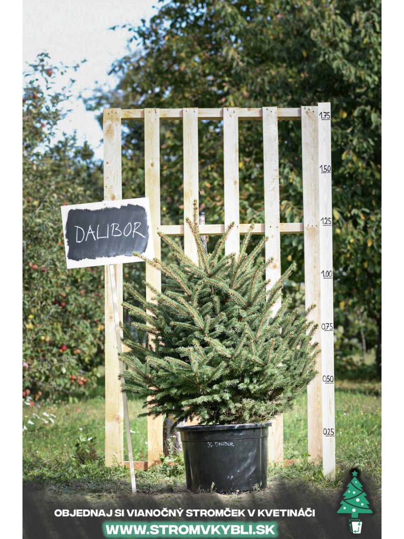Vianocny stromcek v kvetinaci stromvkybli Dalibor 9280 3 2 3 3