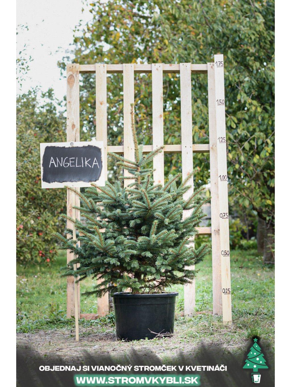 Vianocny stromcek v kvetinaci stromvkybli Angelika