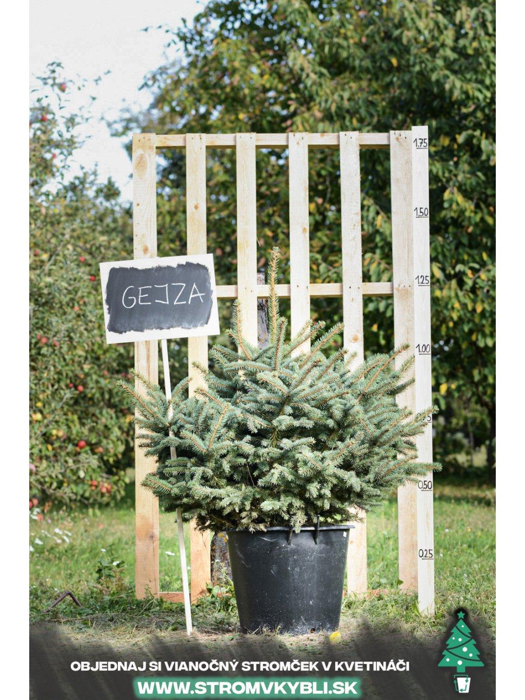 Vianocny stromcek v kvetinaci stromvkybli Gejza 9305 3 2 3 3