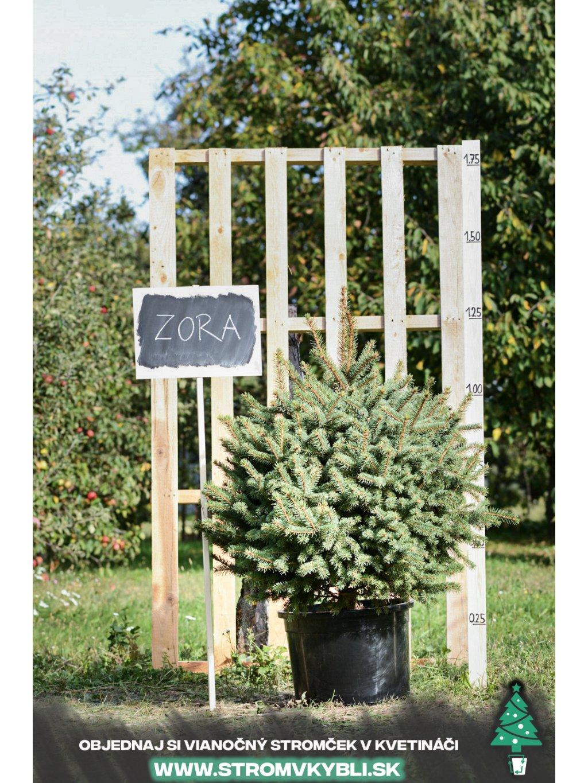 Vianocny stromcek v kvetinaci stromvkybli Zora 9303 3 2 3 3